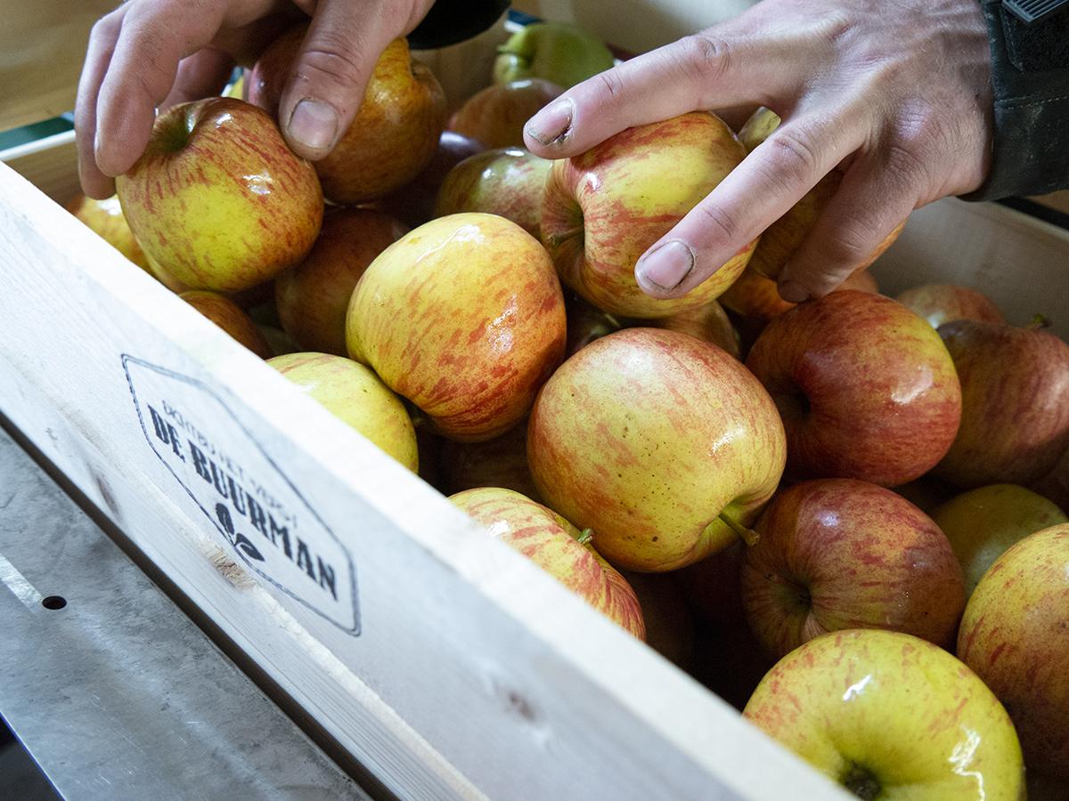 Verhage Fruit